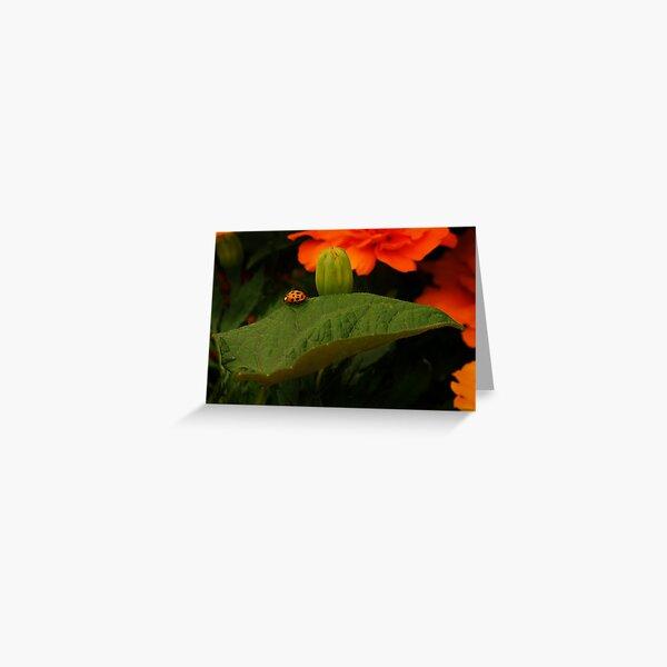 Rambl'n Ladybug  Greeting Card
