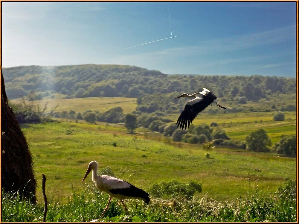 storks exploring my land by Gabriel Popa