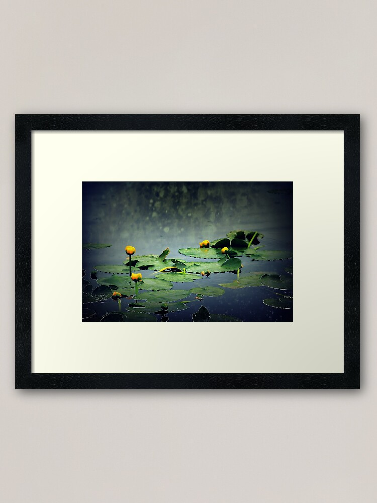Alternate view of lily pads in the rain at Vernonia Lake Framed Art Print