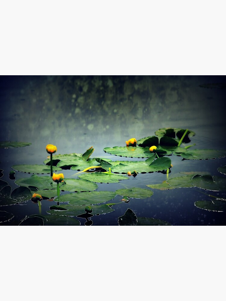 lily pads in the rain at Vernonia Lake by DlmtleArt