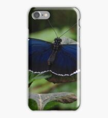 Butterfly Heliconius Cydno iPhone Case/Skin
