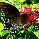 Hungry Swallowtail by David Cortez