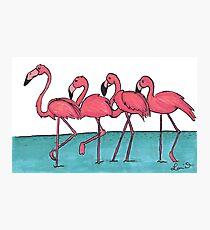 Pink Flamingo  Photographic Print