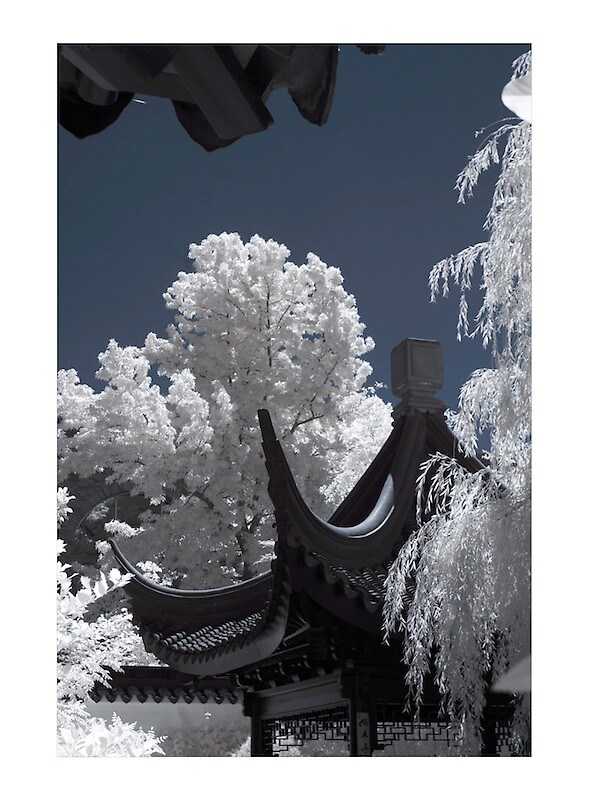 Untitled Infrared by psychedelicmind