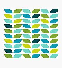 Geometric Pattern: Leaf: Spring Photographic Print