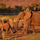 Elephant mother and calf, Kruger National Park by Erik Schlogl