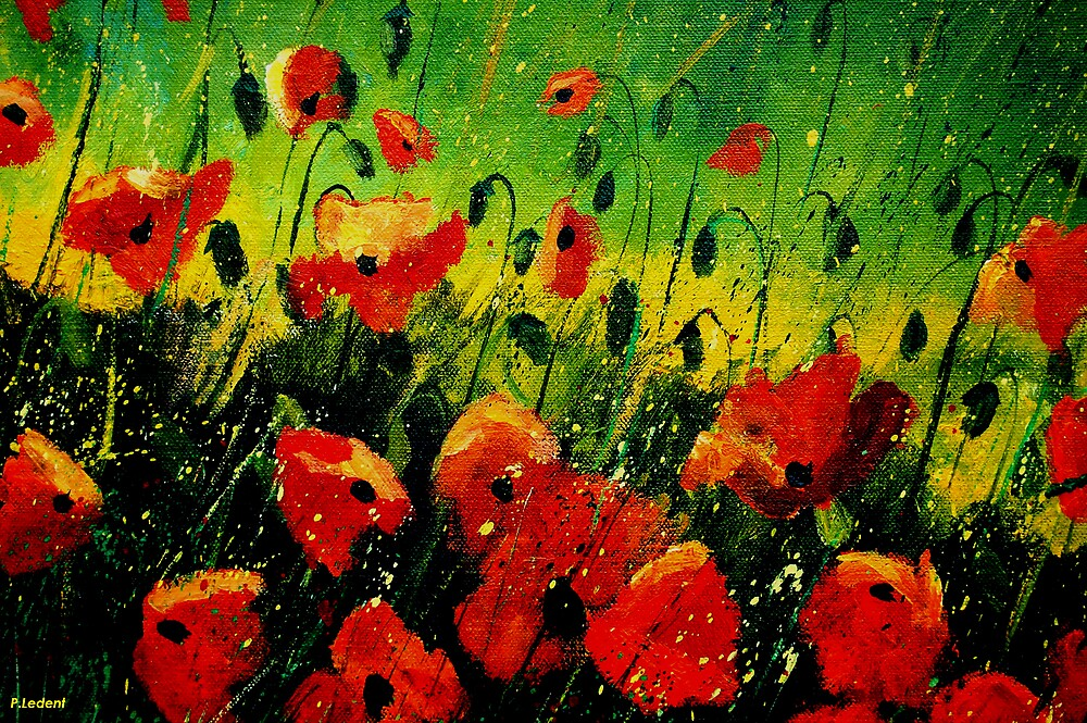 Poppies 1256 by calimero