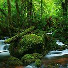 cement creek by Donovan Wilson