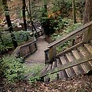 Stairs In The Wilderness by Jane Neill-Hancock