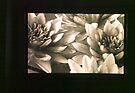 untitled #3: flowers by Juilee  Pryor
