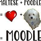 Moodle Dog by Ian McKenzie