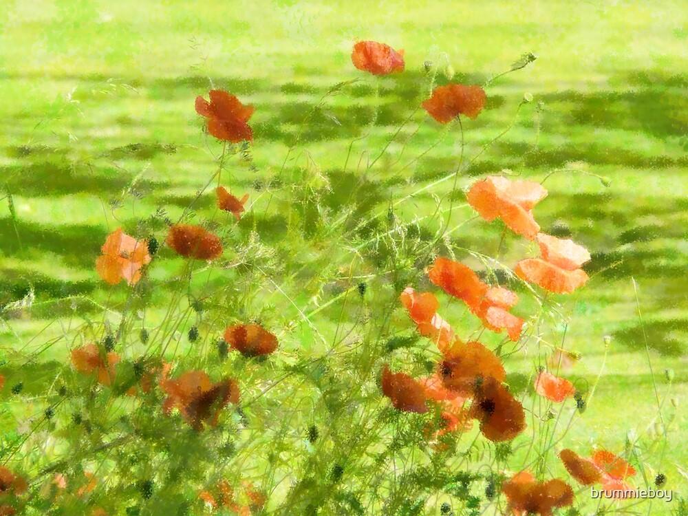 Impressionist Poppies by brummieboy
