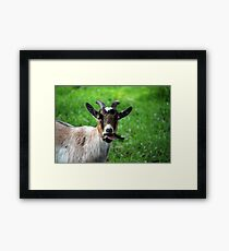 Ireland Goat Framed Print