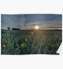 cornfield Poster