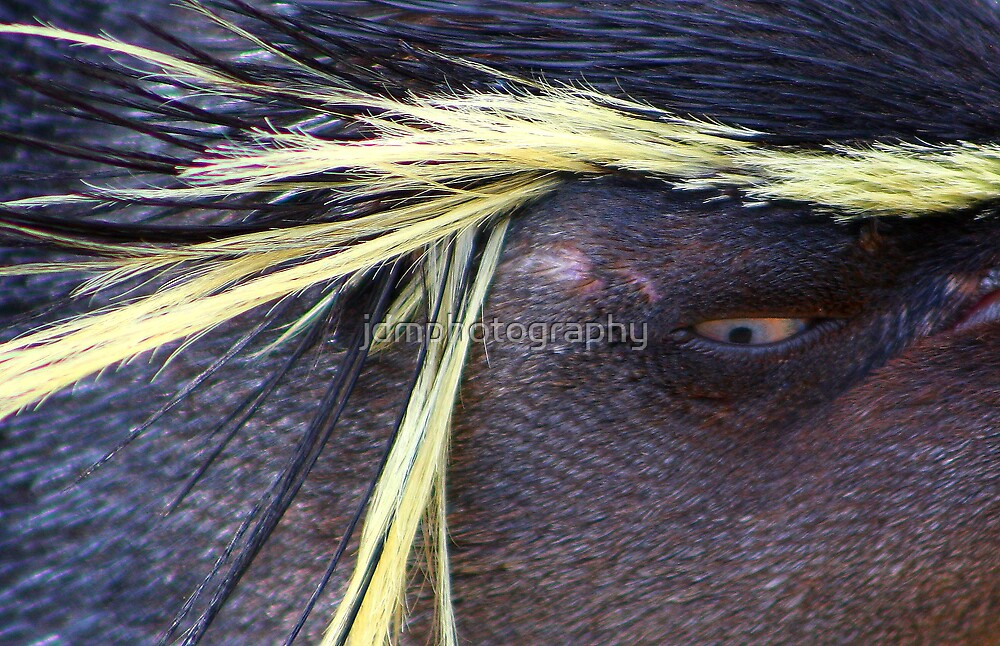 Rockhopper Penguin Abstract....... by jdmphotography