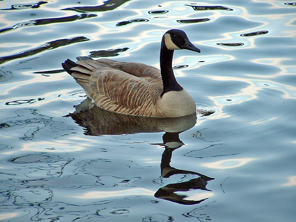 Canadian Goose relecting on Life on the Pond by Patricia Shriver