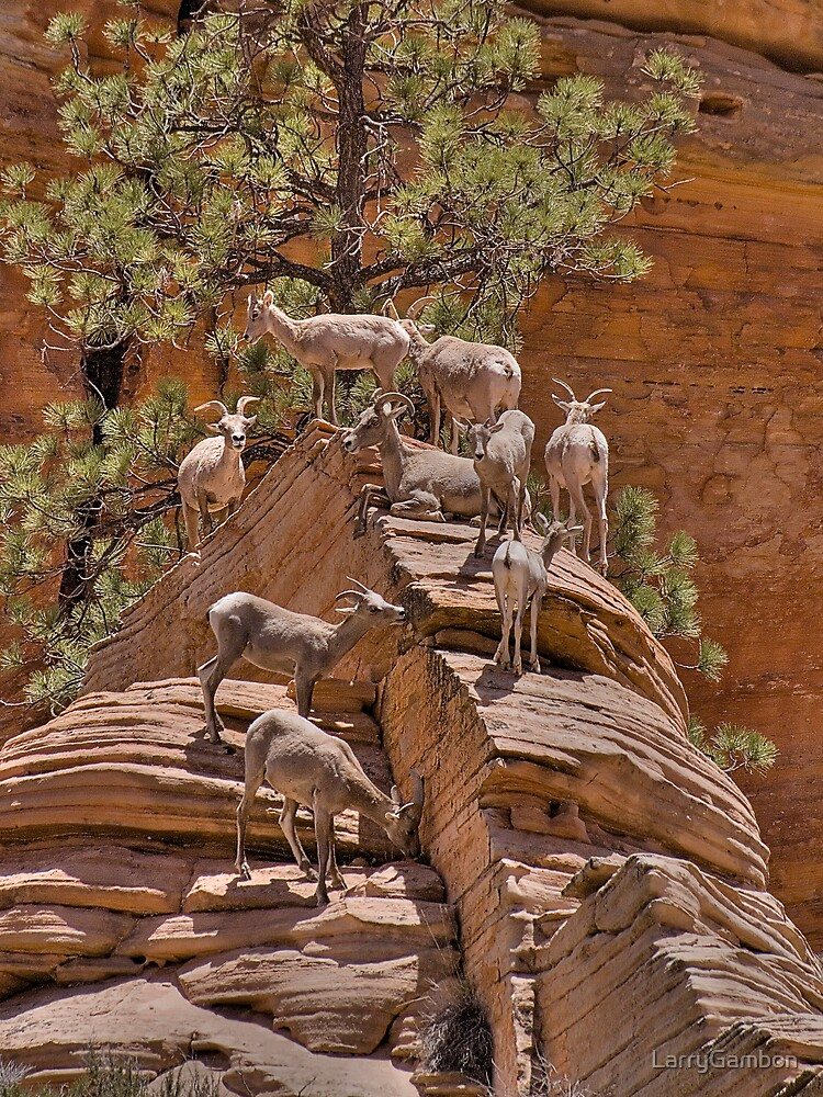 Bighorn Sheep in Zion National Park by LarryGambon