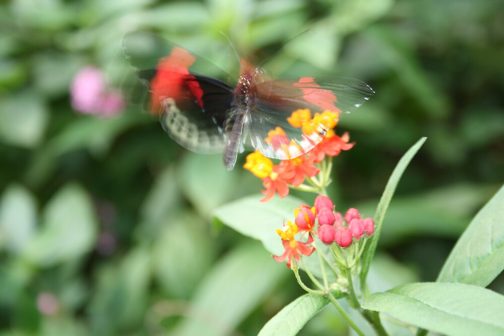 butterfly flutterby by Justine McCreith