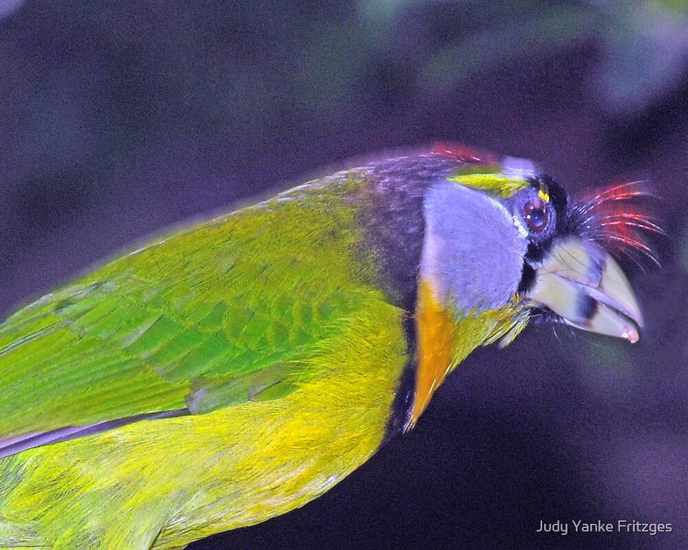 Bird by Judy Yanke Fritzges