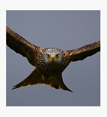 Red Kite Photographic Print