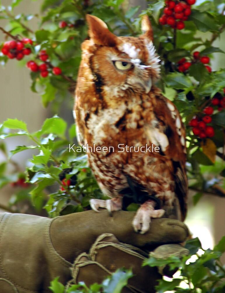 Screech Owl by Kathleen Struckle