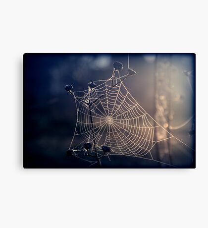 Spiders Sunrise Canvas Print