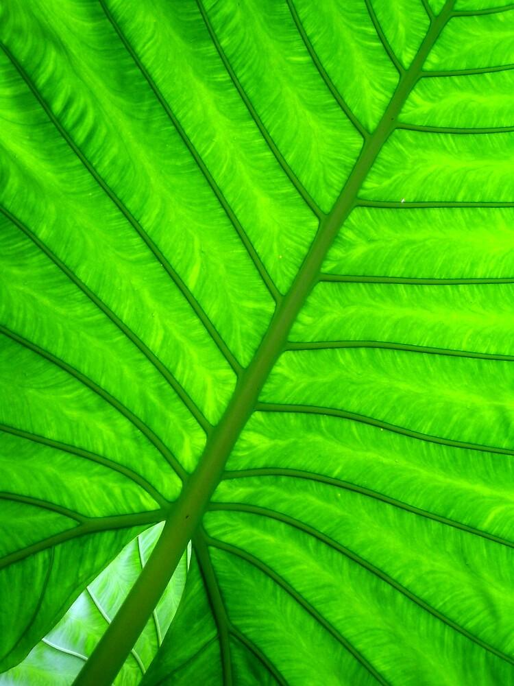 Green Veins by KellyRigby