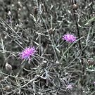 Spotted Knapweed Mindscape by Wayne King