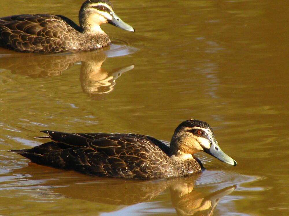 Duck Duck by Glenn Browning
