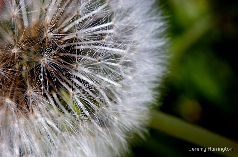 Light And Fluffy by Jeremy Harrington