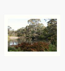 """Wittunga Botanic Park"" Art Print"