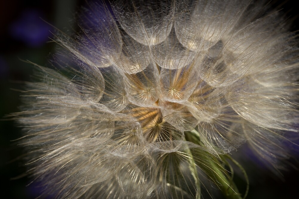 Going to Seed II by Lynn Gedeon