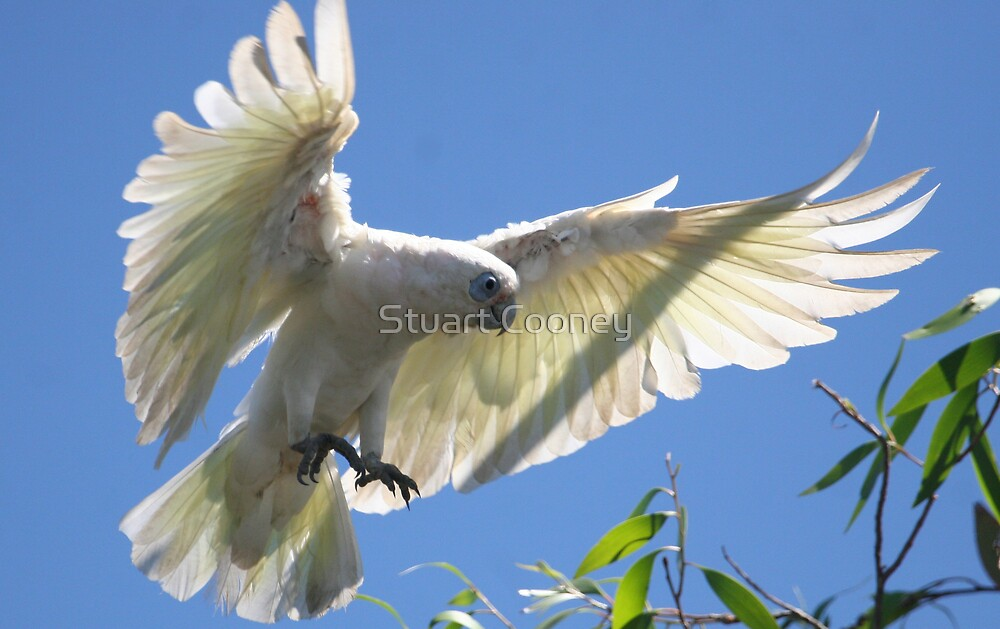 Coming in for landing by Stuart Cooney