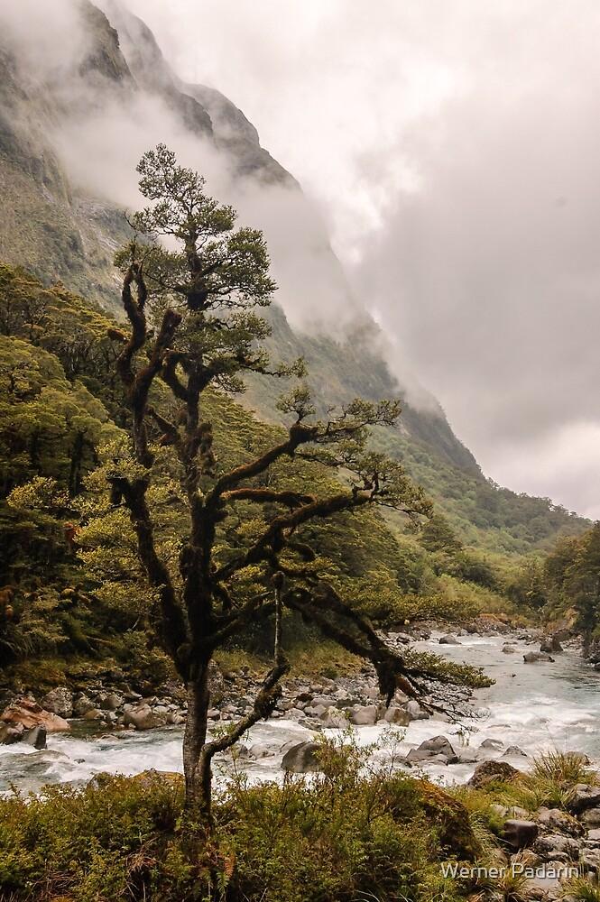 Fiordland by Werner Padarin