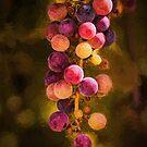 Traubenjuwelen von Celeste Mookherjee