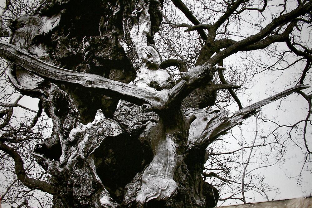 Gog, the Ancient Oak, Glastonbury by Amanda Gazidis