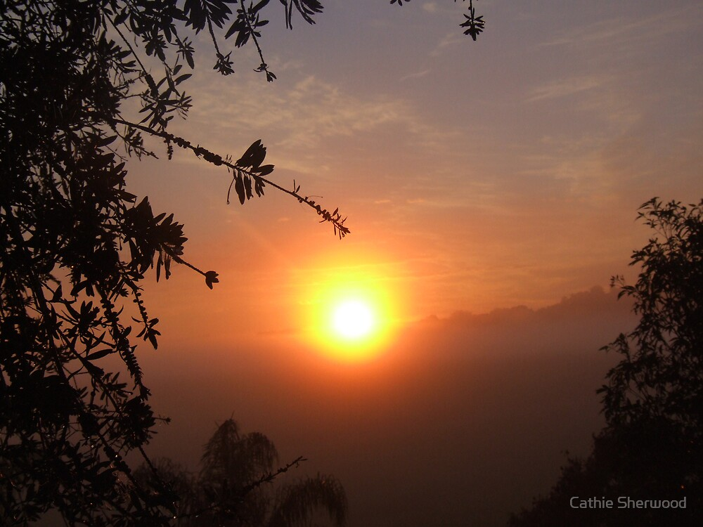 Sunrise Framed and Golden by Cathie Sherwood