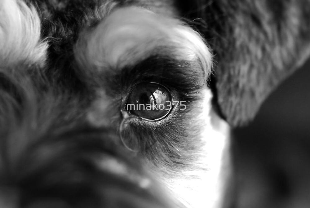 dog eye by minako375