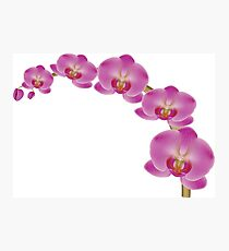 Flower Orchid Photographic Print