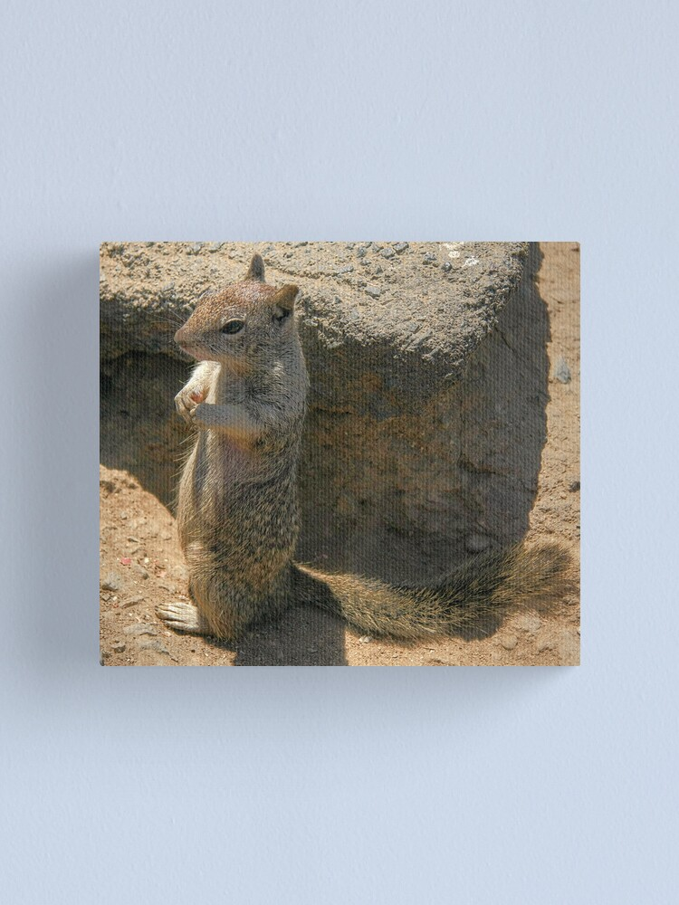 Alternate view of Squirrel playing he is a meercat.... Canvas Print