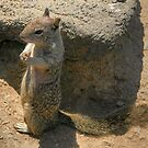 Squirrel playing he is a meercat.... by Anne-Marie Bokslag