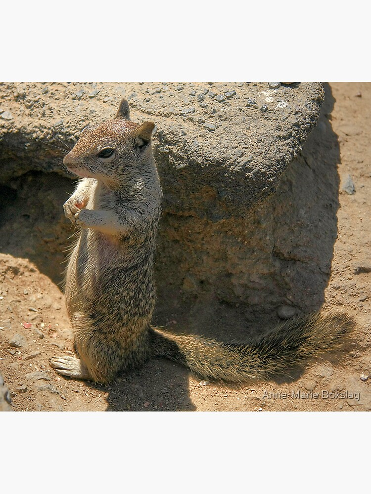 Squirrel playing he is a meercat.... by amb1946