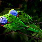 Technicolour Lorikeets by margotk