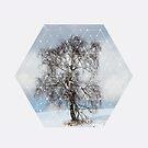 Nature and Geometry - The Sad Tree by Denis Marsili