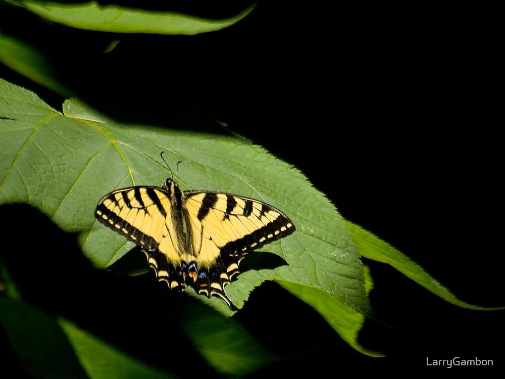 Swallowtail Butterfly by LarryGambon