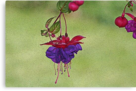 One Bloom by elisab