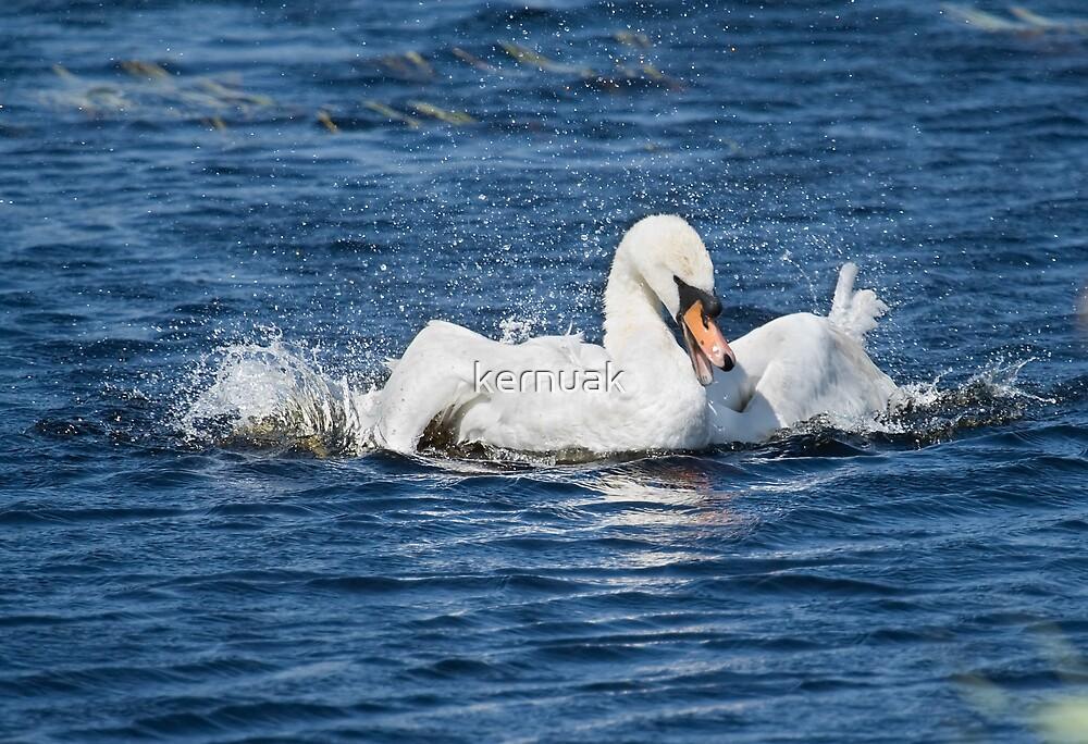 Swan Bathtime by kernuak