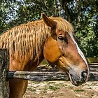 Brown Horse by ShootFirstNYC