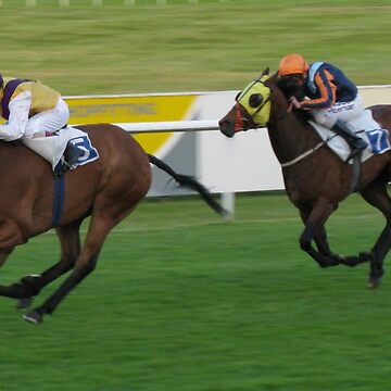 Race Horses  by TomConway