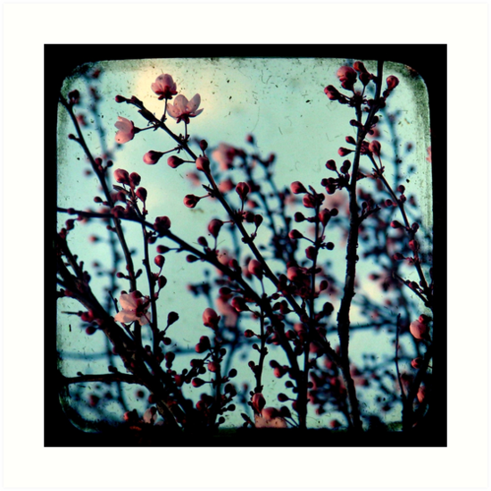 Spring Blossoms Through The Viewfinder - TTV by Kitsmumma